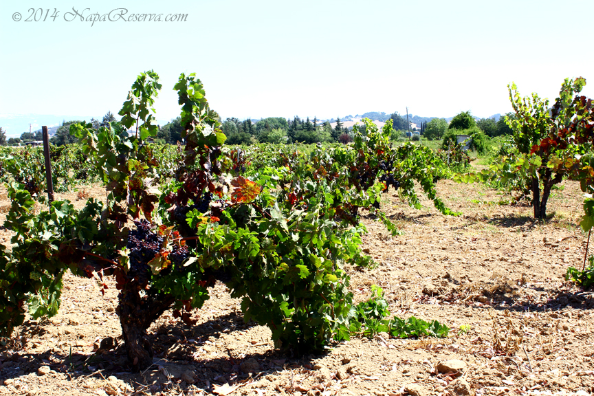 Ribera Del Duero vineyards S